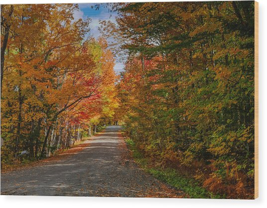 Typical Vermont Dirve - Fall Foliage Wood Print