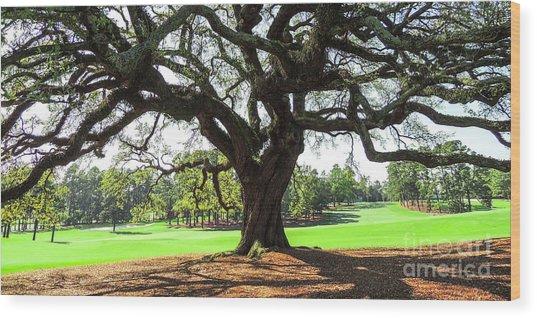 Under An Augusta Oak Wood Print