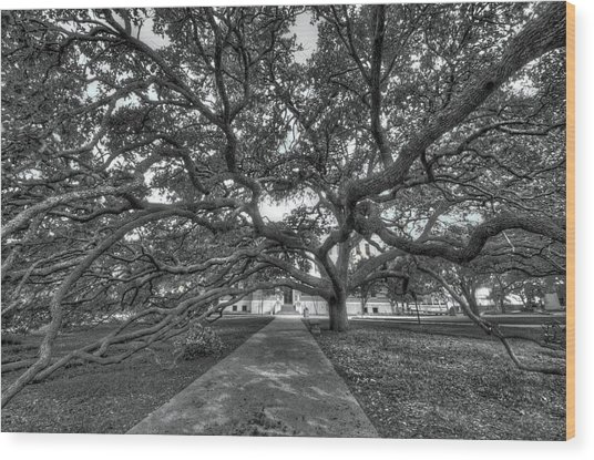 Under The Century Tree - Black And White Wood Print
