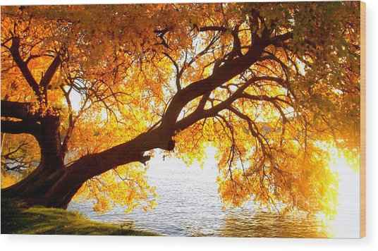 Wood Print featuring the photograph Under The Yellow Tree by Viviana  Nadowski