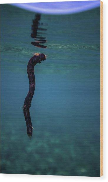 Underwater Branch Wood Print