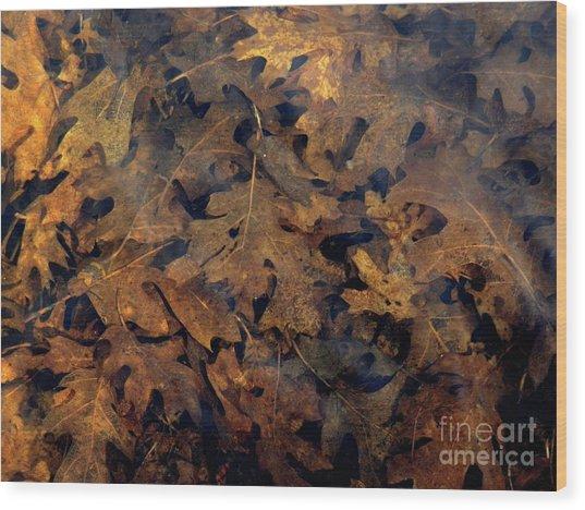 Underwater Leaves Wood Print by Robert Ball