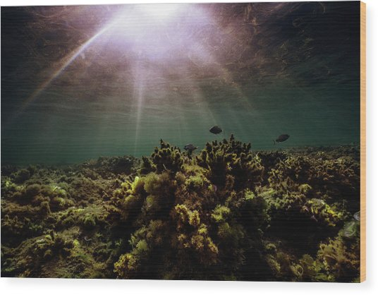 Underwater Sunset Wood Print
