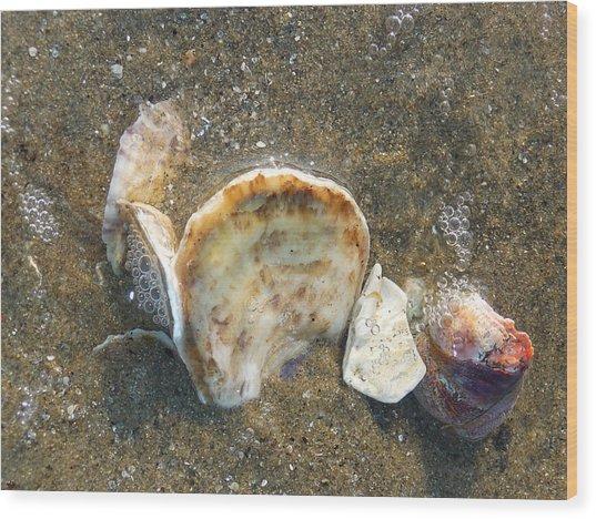 Underwater Treasures Wood Print by Margie Avellino