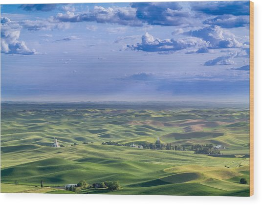 Undulating Palouse Wheatfields Wood Print