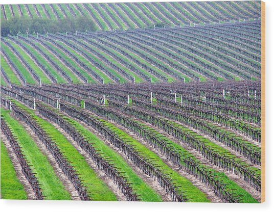 Undulating Vineyard Rows Wood Print