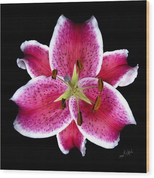 Unique Lily In Fushia Wood Print by Kimxa Stark