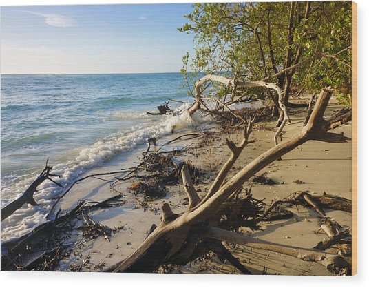 The Unspoiled Beaty Of Barefoot Beach Preserve In Naples, Fl Wood Print