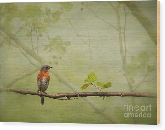 Wood Print featuring the photograph Until Spring by Lois Bryan