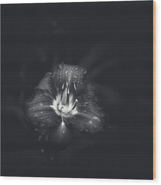 cee069ff70d Untitled Lily Wood Print Untitled Lily. Scott Norris