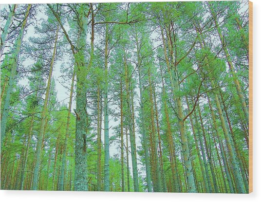 Up Above Wood Print