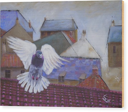 Urban Pigeon Wood Print