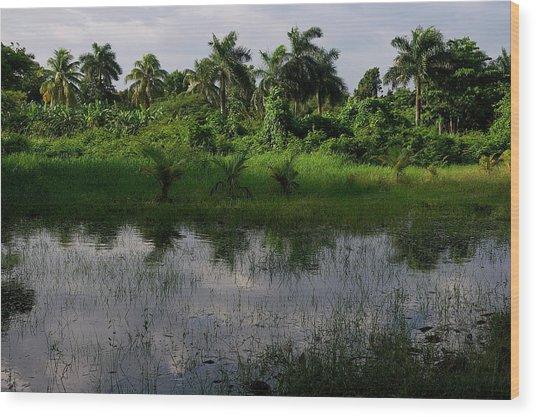 Urban Swamp Wood Print