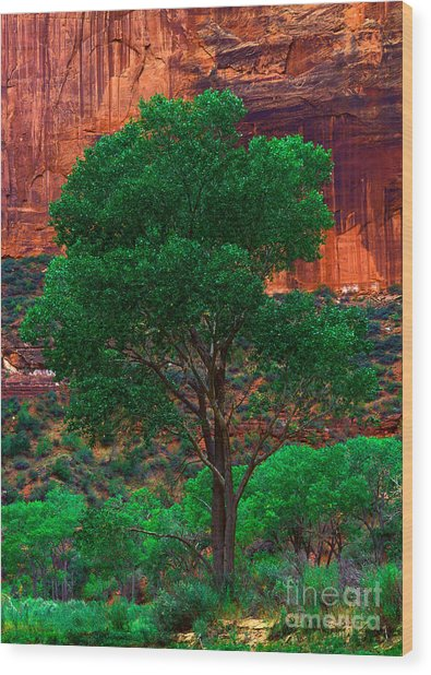 Utah - Cottonwood Wood Print