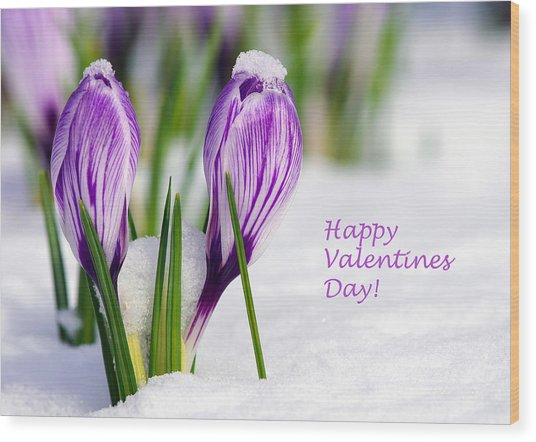 Valentines Day Crocuses Wood Print