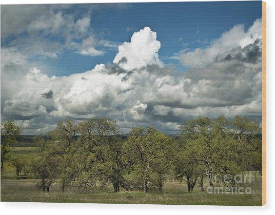Valley Oaks Wood Print