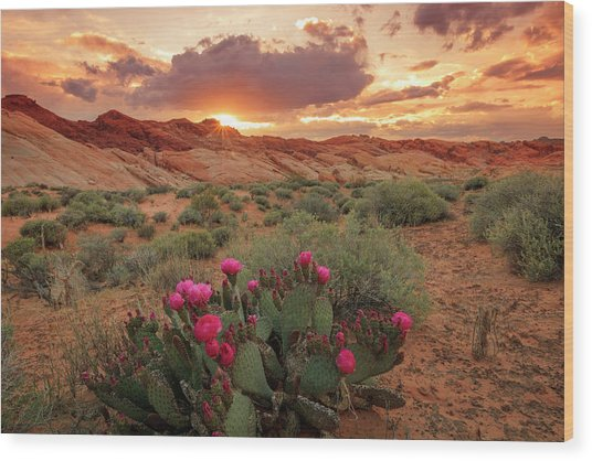 Valley Of Fire Wood Print by Johnny Adolphson