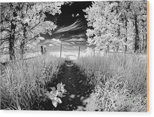 Valley Of Light Wood Print