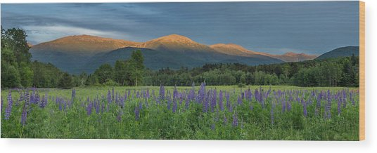 Valley Way Lupine Sunset Wood Print