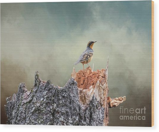 Varied Thrush On A Dead Tree Wood Print