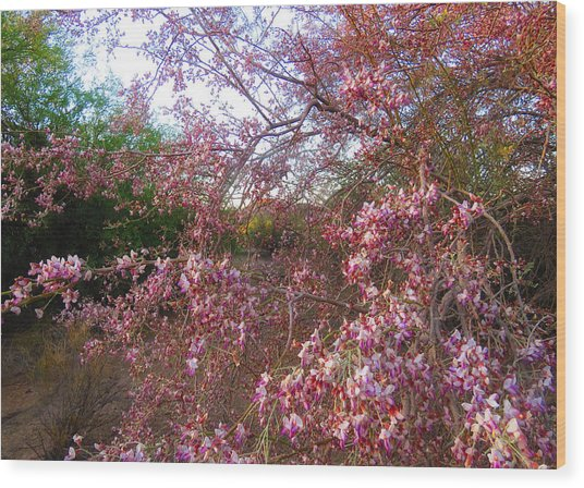 Vekol Wash Desert Ironwood In Bloom Wood Print