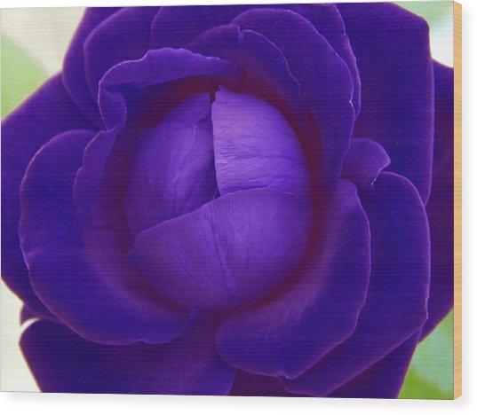 Velvet Blue Lettuce Rose Wood Print