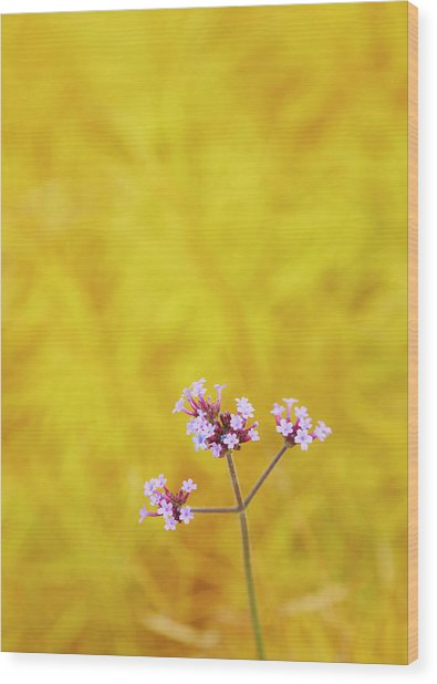 Verbena Wood Print