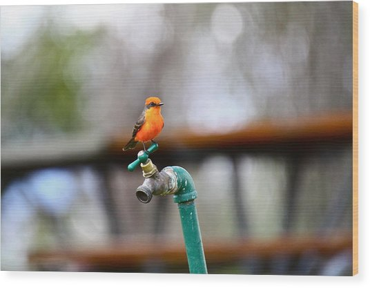 Vermilion Flycatcher Two Wood Print