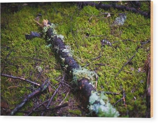 Vermont Forest. Wood Print by Robert Davis