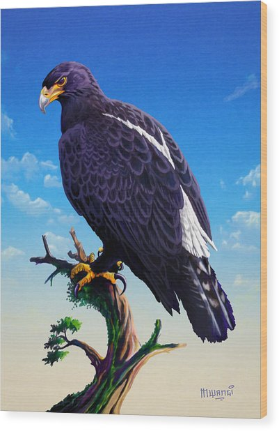 Verreaux's Eagle  Wood Print