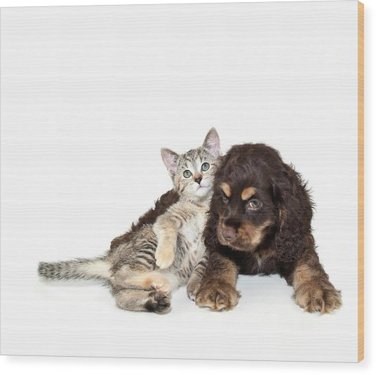 Very Sweet Kitten Lying On Puppy Wood Print by StockImage