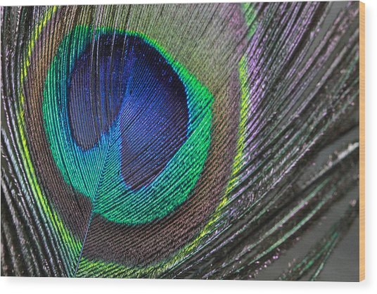 Vibrant Green Feather Wood Print