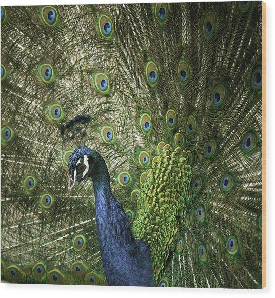Vibrant Peacock Wood Print
