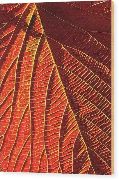 Vibrant Viburnum Wood Print