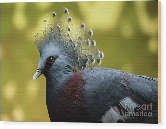 Victoria Crowned Pigeon Wood Print