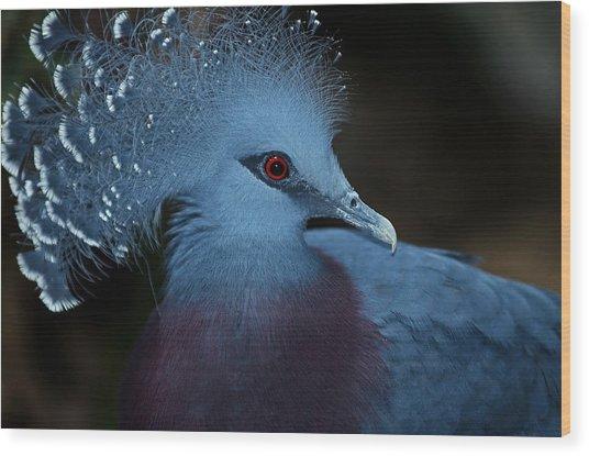 Victorian Crowned Pigeon Wood Print