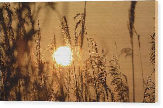 View Of Sun Setting Behind Long Grass B Wood Print