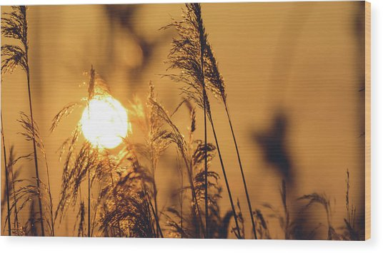 View Of Sun Setting Behind Long Grass C Wood Print