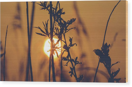 View Of Sun Setting Behind Long Grass D Wood Print