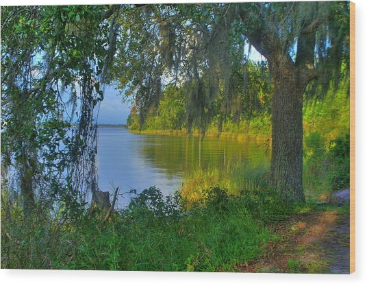 View Under The Spanish Moss Wood Print