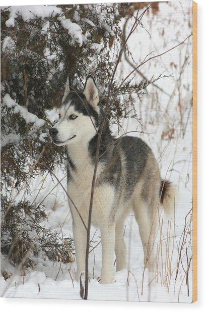 Vigilant Wood Print