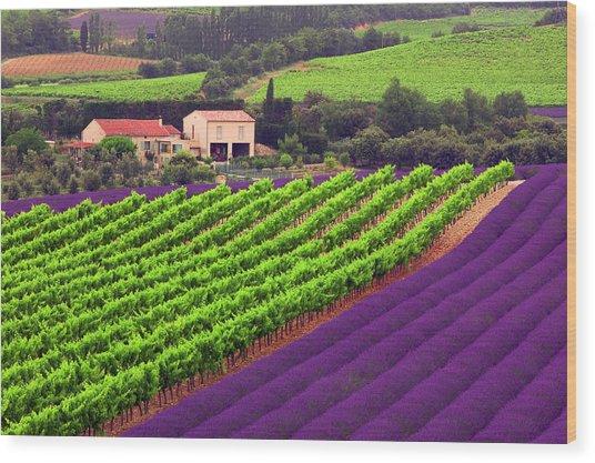 Vignes Et Lavande Wood Print