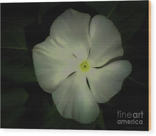 Vinca Bloom Night Glow Wood Print