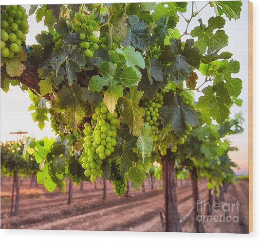 Vineyard 3 Wood Print