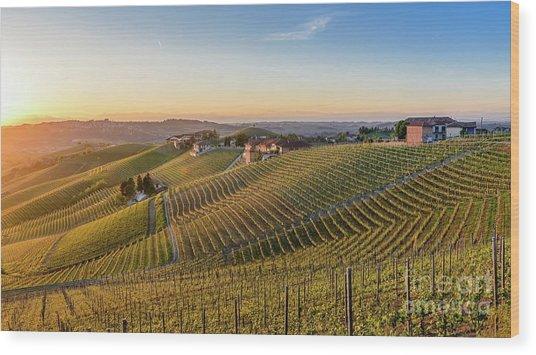 Vineyard At Barbaresco, Italy Wood Print