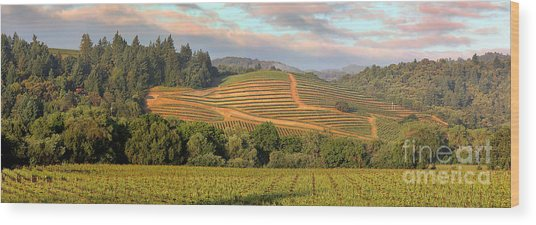 Vineyard In Dry Creek Valley, Sonoma County, California Wood Print