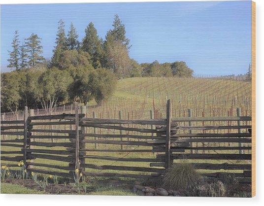 Vineyard In The Spring Wood Print