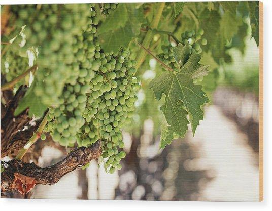 Wine Vineyard Of St. Helena - Grapevine Napa Valley Photography Wood Print