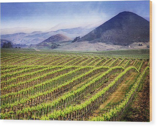 Wood Print featuring the photograph Vineyard by Scott Kemper