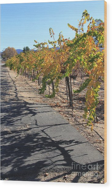 Vineyard Shadows Wood Print